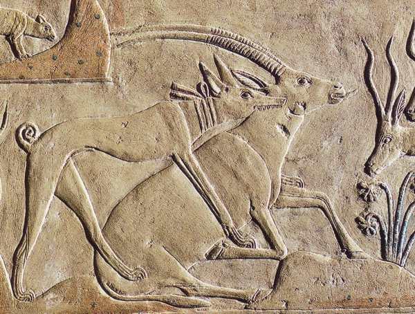 Басенджи (африканская нелающая собака): описание породы, характер, особенности, цена щенков, фото
